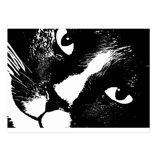 Black and white cat face close up postcard