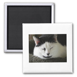 Black and White Cat Humor Square Magnet