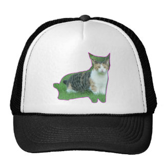 Black and White cat in grass Hats