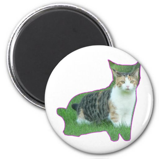 Black and White cat in grass Magnets