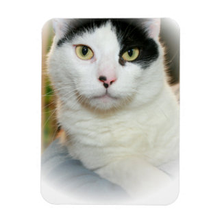 BLACK AND WHITE CAT MAGNET