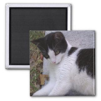 Black and White Cat Fridge Magnet
