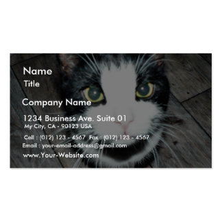 Black And White Cat Pack Of Standard Business Cards