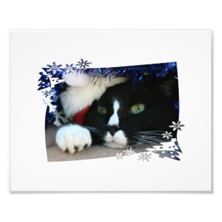 Black and white cat , santa hat, tinsel and a paw photographic print