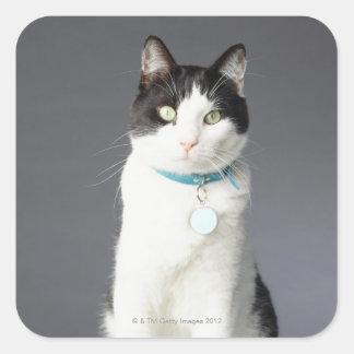 Black and white cat square sticker