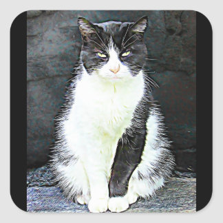 Black and White Cat Stickers