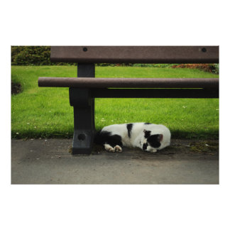 Black and White Cat Under Bench Photograph