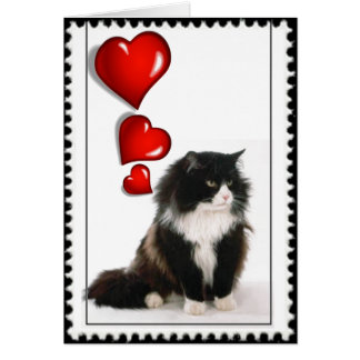 Black and white cat valentine greeting card
