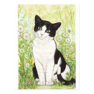 Black and White cat with daisies Postcard