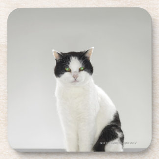 Black and white cat with glowing green eyes coaster