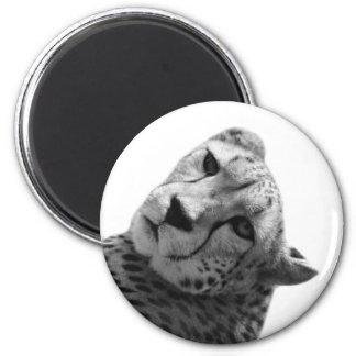 Black and white cheetah animal wild  jungle photo 6 cm round magnet