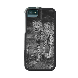 Black and White Cheetah Photograph, Animal Case For iPhone 5