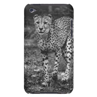 Black and White Cheetah Photograph, Animal iPod Touch Case-Mate Case