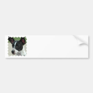 Black and White Chihuahua Bumper Stickers