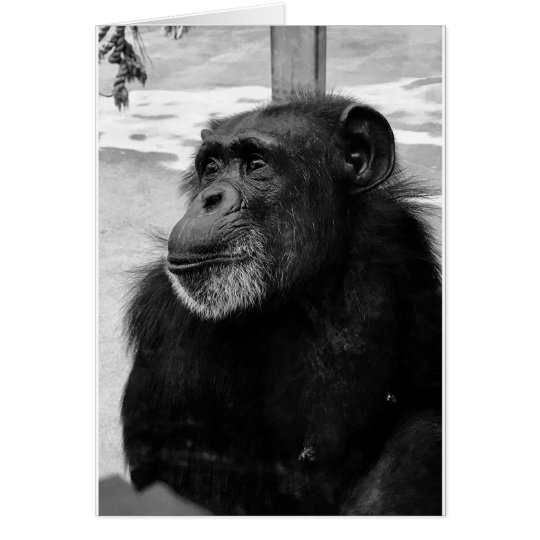 Black and White Chimpanzee Monkey Photo - Blank