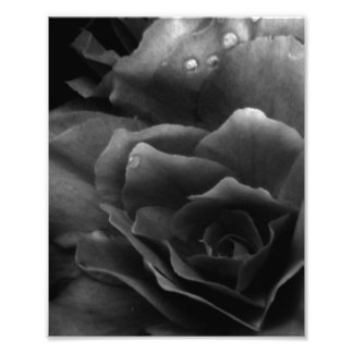 Black and White Close Up of a Double Begonia Photo Print