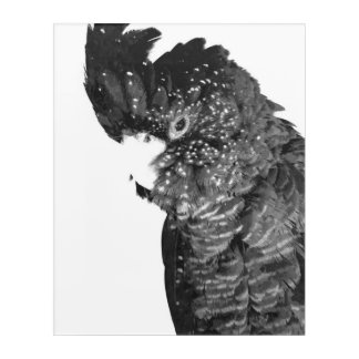 Black and White Cockatoo Portrait Acrylic Print