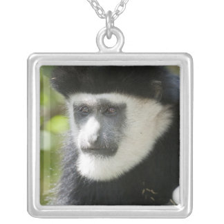 Black and White Colobus Monkey, Colobus Silver Plated Necklace