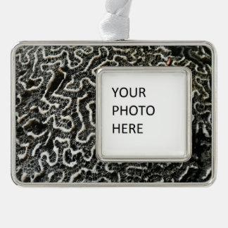 Black and White Coral II Abstract Nature Photo Silver Plated Framed Ornament