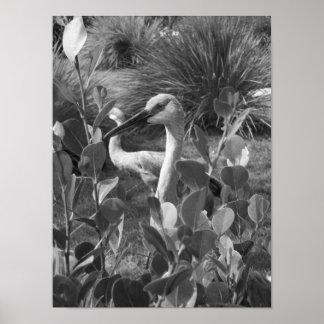 Black And White Crane Exotic Bird Photograph Poster