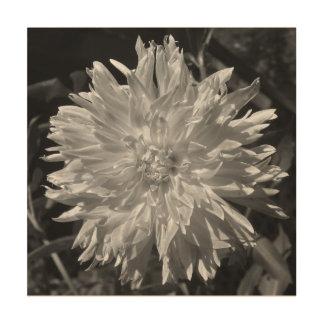 Black and White Dahlia Canvas Wood Prints