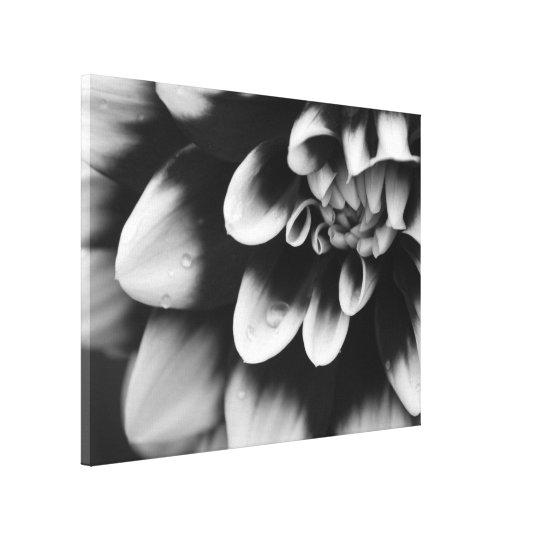 Black and White Dahlia Flower Blossom Canvas Print