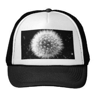 Black and white dandelion cap