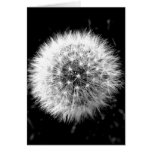 Black and white dandelion greeting card