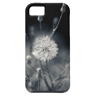 Black and White Dandelion Photography iPhone 5 Covers