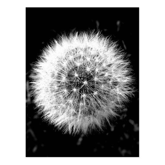 Black and white dandelion postcard