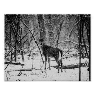 Black and White Doe White-tailed Deer  Poster, Poster