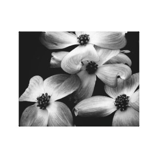 Black and White Dogwood Flower Canvas Canvas Print