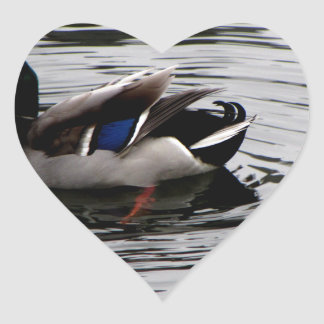Black and White Duck with Green Head Ripples River Heart Sticker