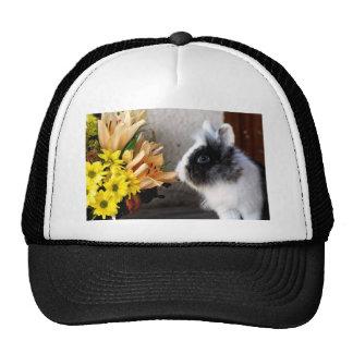 Black and white dwarf rabbit hats