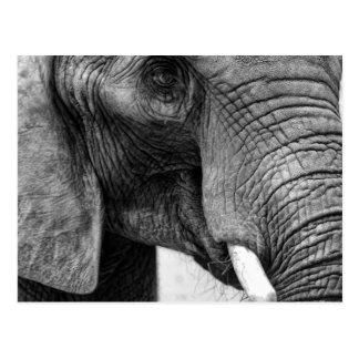 Black and White Elephant Postcard