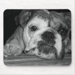 Black and White English Bulldog Puppy Mousepad