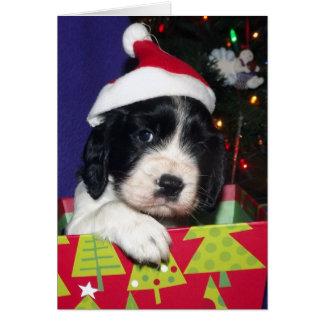 Black and White English Springer Spaniel Christma Greeting Card