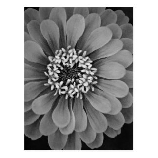 Black and White Flower Photo Postcard