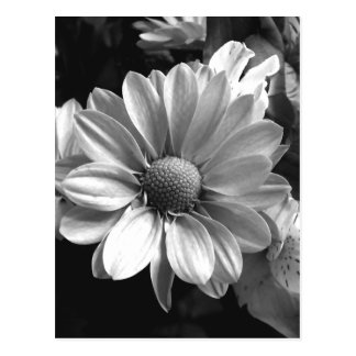 Black and White Flower Photo Post Card