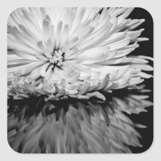 Black and White Flower Photo Square Stickers