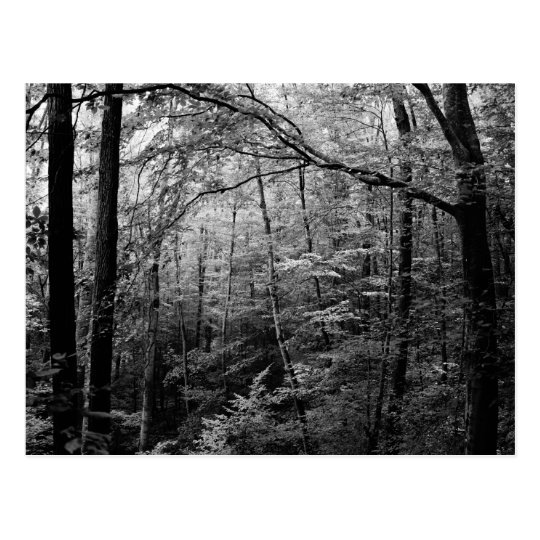 Black and White Forest Postcard