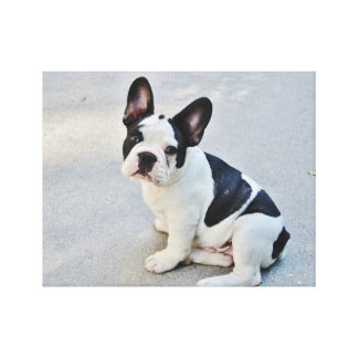 Black and White French Bulldog Canvas Prints