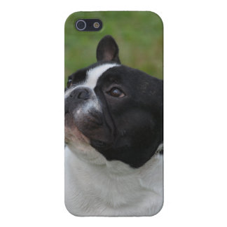 Black and White French Bulldog iPhone 5 Covers