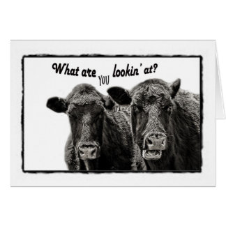 Black and White Funny Cows Note Card