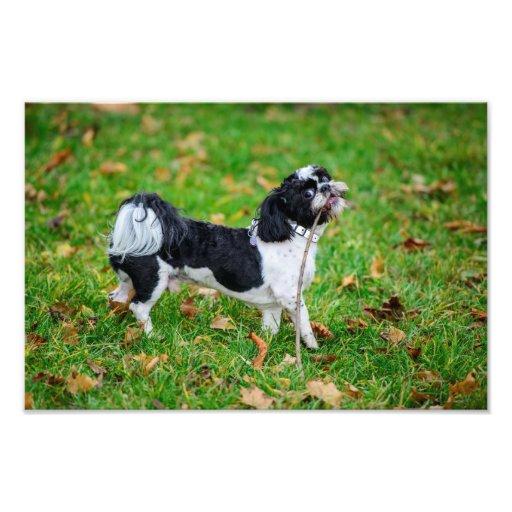 Black and white funny dog art photo