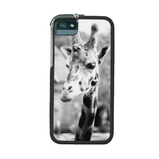 Black and White Giraffe Portrait Photography iPhone 5/5S Cover