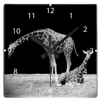 Black and White Giraffes Two Giraffes Square Wallclocks
