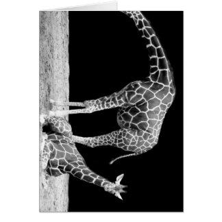 Black and White Giraffes Two Giraffes Greeting Card