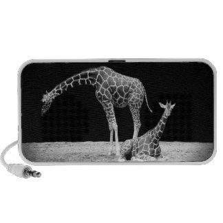 Black and White Giraffes Two Giraffes iPod Speakers