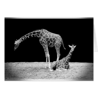 Black and White Giraffes Two Giraffes Note Card